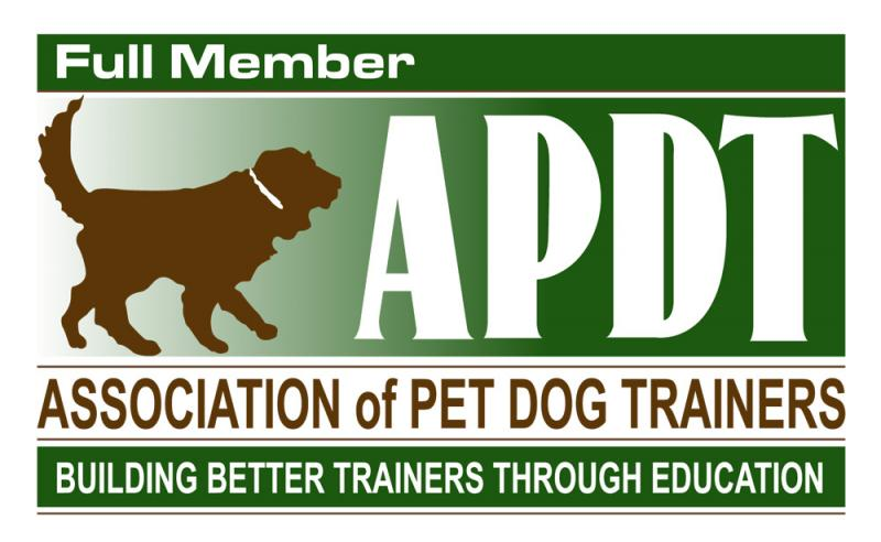 Puppy and dog training tips - Train Your Dog Month