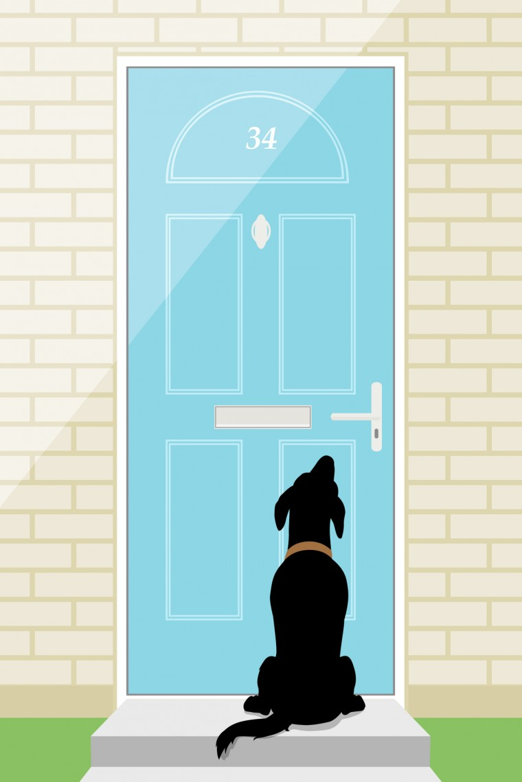 Dogs and doorbells how to manage the madness robin bennett dogs and doorbells how to manage the madness eventshaper