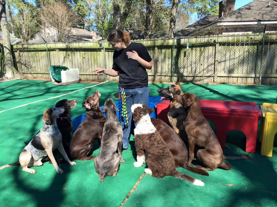 ABC Pet Resort and Spa, Houston, TX