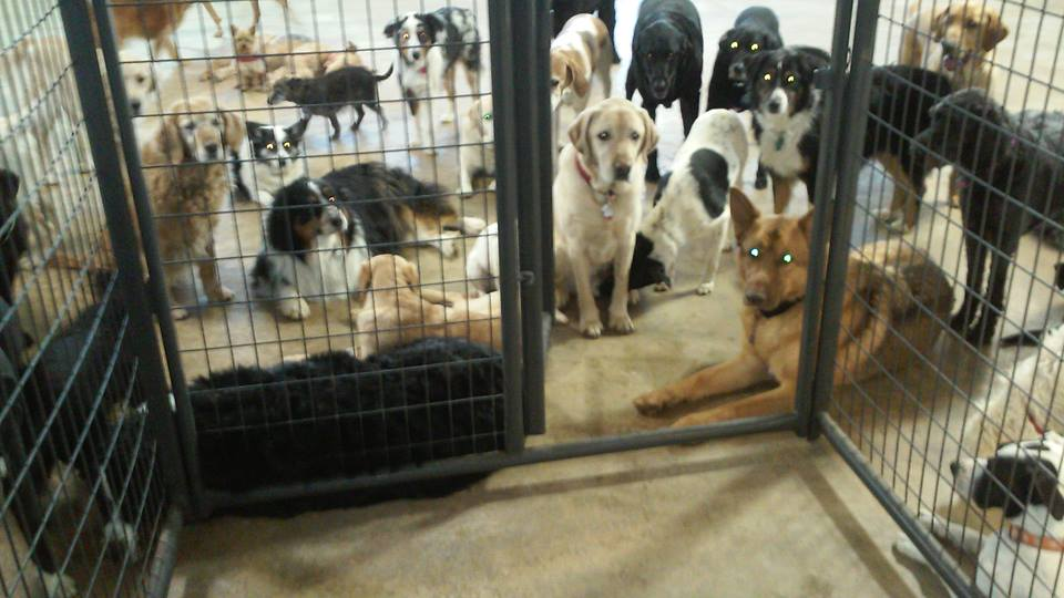 Bowhaus Dog Daycare & Boarding, Erie, CO