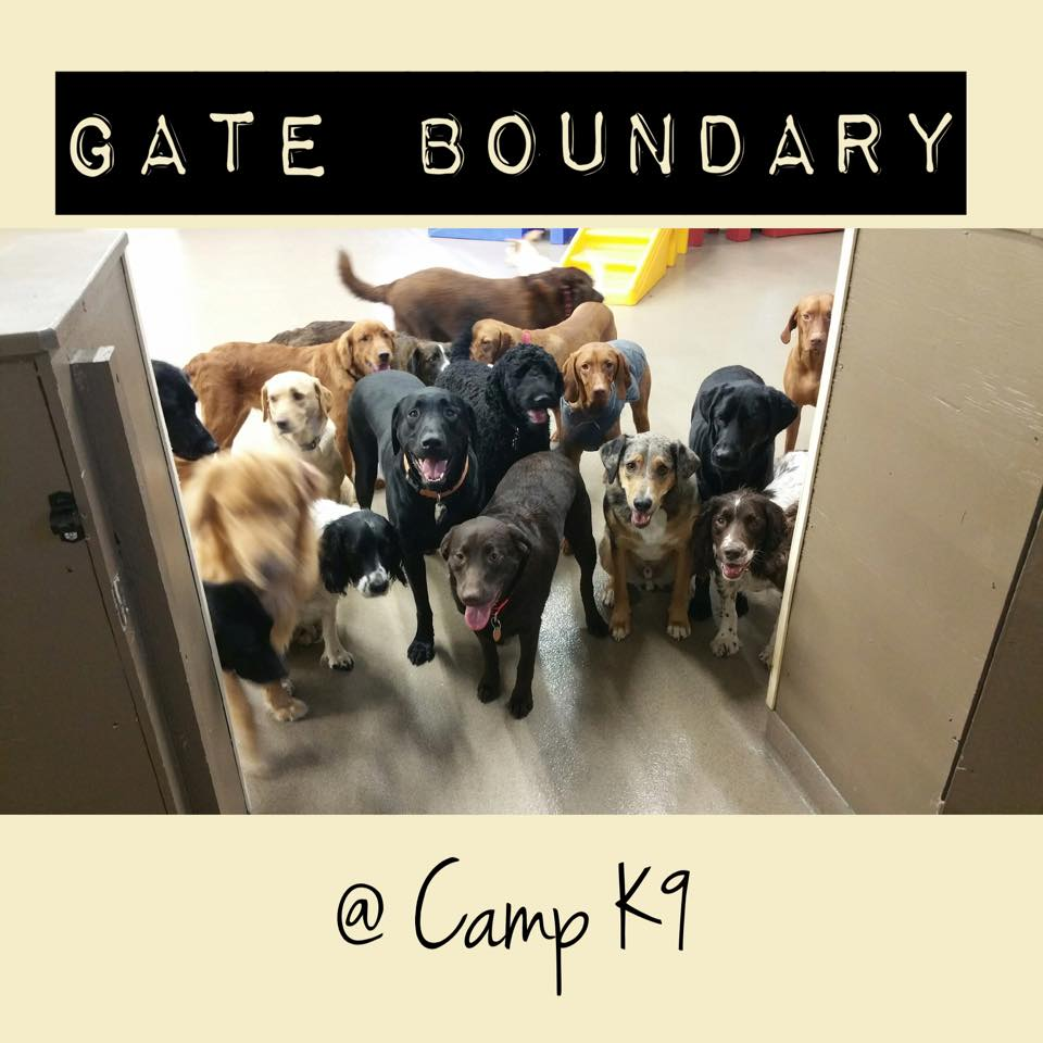 Camp K9, Madison, WI working on gate boundaries (note the open door)