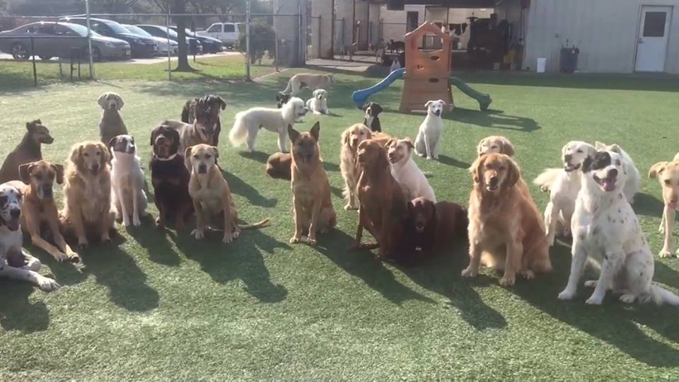 Rover Oaks Pet Resort, Houston, TX practicing group sits at the gate!