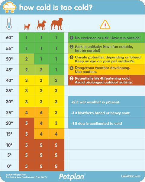 What Temperature Can A Dog Survive Outside