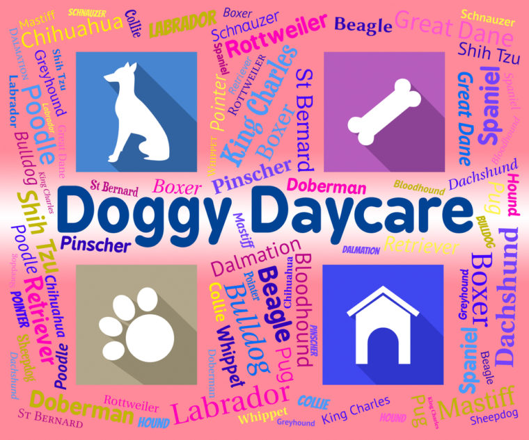 Doggy Daycare Representing Pets Pups And Purebred