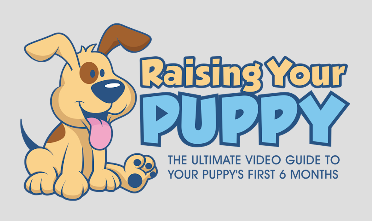 "To Lindsay With Little Dog Tips For Reaching Out To Me About My Newest  Course €�raising Your Puppy"" Pop On Over To Her Blog And Check Out The  Article"